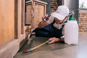 Pest control specialist in Melbourne inspecting a home